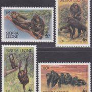 chimpansee